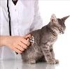 Ветеринарные клиники в Суровикино